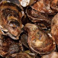 ハイゲンキ|貝カルシウム(牡蠣殻)